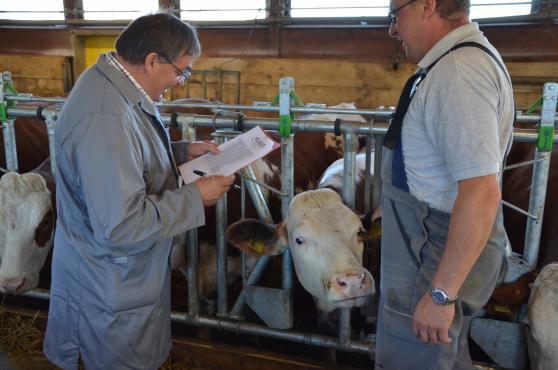 Betreuung der Rinder durch Veterinäre