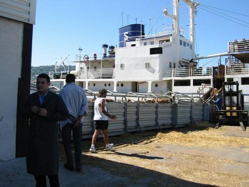 Transportschiff Verladung