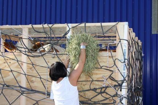 Fütterung Tiere in Transportbox