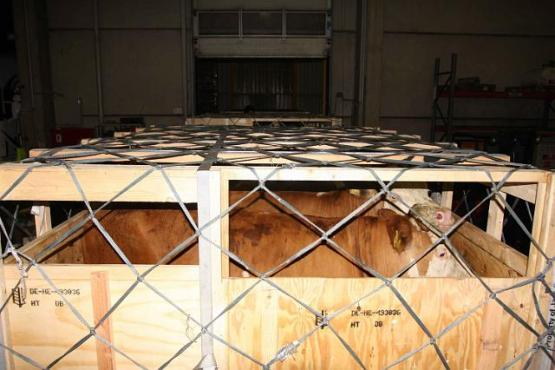 Tiere in Transportbox