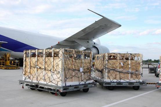 Tiere in Transportbox vor Flugzeug