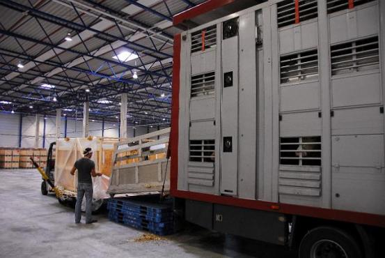 LKW in Halle Umladung Transportbox