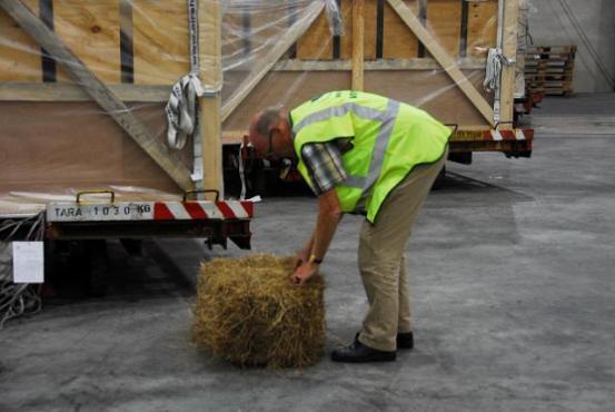 Mann mit Stroh für Transportbox