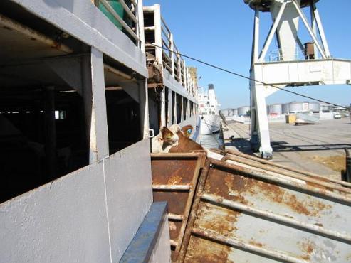 Ship loading in Algeria