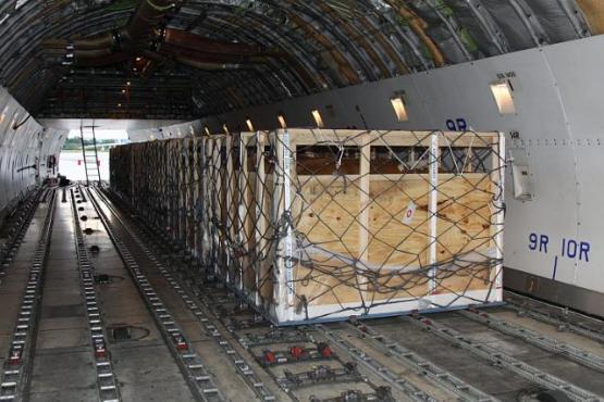 Фото крупного рогатого скота в самолете